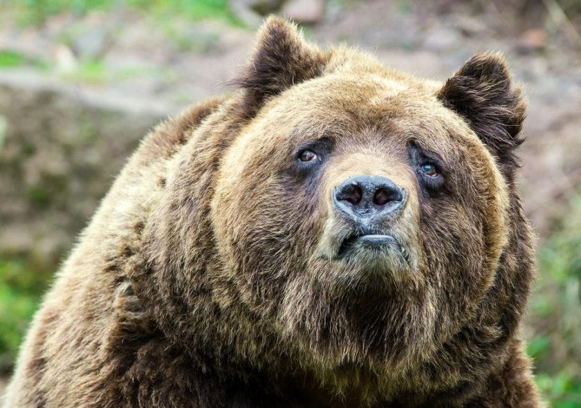 SEO-тексты и медвежьи услуги
